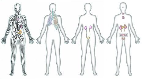 Good IEQ integrates and serves the needs of the body systems represented by our senses and respiratory systems. Image credit: Dorling Kindersley